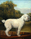 "Copy of ""White Poodle in a Punt"" by George Stubbs"